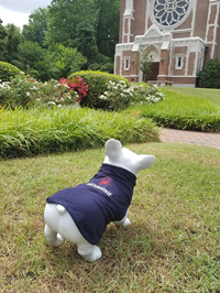 All Star Pet Tee with Mascot Richmond